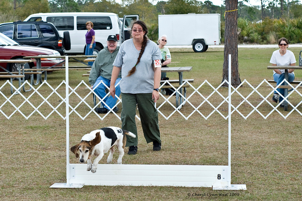 The Basset Hound and owner competed in both Rally and in Obedience.
