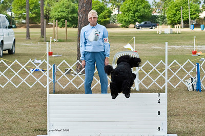 Standard Poodle - Recall over the High Jump in Open Obedience