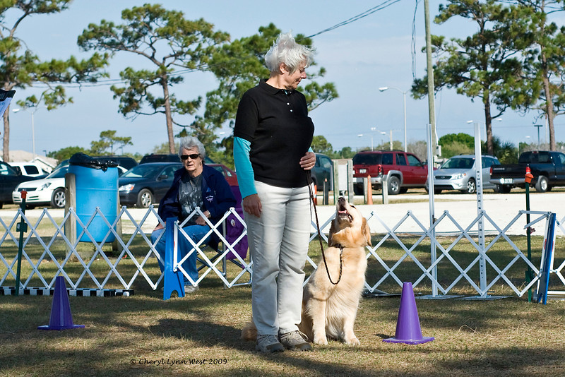 The Golden Retriever took first place in Novice B obedience