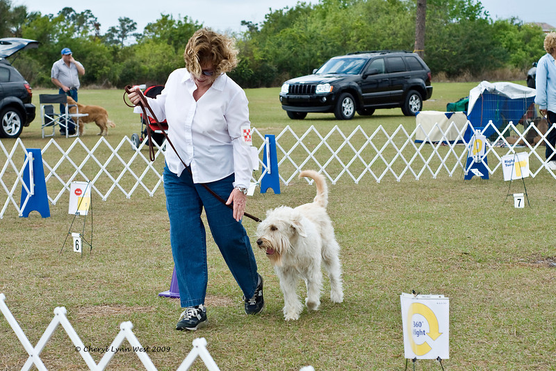 Abbey, a Wheaten Terrier, and her owner compete in Rally