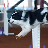 Tailwaggers Fri Ring 1 Jumpers-7