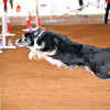 Tailwaggers Fri Ring 1 Jumpers-6