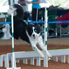 Tailwaggers Fri Ring 1 Jumpers-12