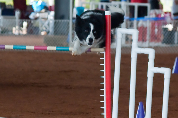 Tailwaggers Fri Ring 1 Jumpers-10
