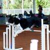 Tailwaggers Fri Ring 1 Jumpers-13