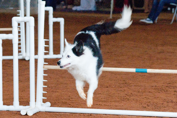 Tailwaggers Sat Ring 1 Snooker-1
