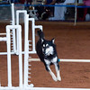 Tailwaggers Sat Ring 1 Snooker-8