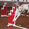Tailwaggers Sat Ring 1 Snooker-11
