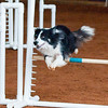 Tailwaggers Sat Ring 1 Snooker-4