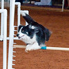 Tailwaggers Sat Ring 1 Snooker-3