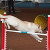 Tailwaggers Sat Ring 1 Snooker-10