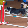 Tailwaggers Sat Ring 1 Snooker-5
