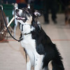 Tailwaggers Candids-5