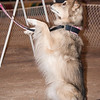 Tailwaggers Candids-3