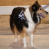 Tailwaggers Candids-8