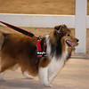 Tailwaggers Candids-7