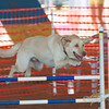 Treasure Coast Kennel Club : 39 galleries with 5915 photos