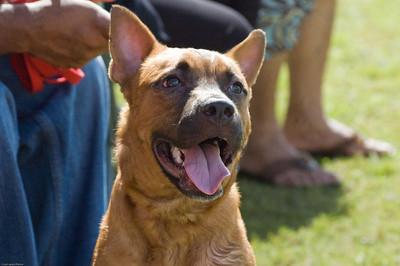 Boca Raton Dog Show-61