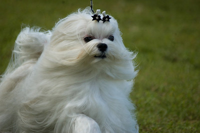 Boca Raton Dog Show-42