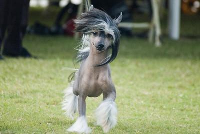 Boca Raton Dog Show-73