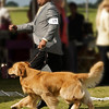 Boca Raton Dog Club Show 2011 :