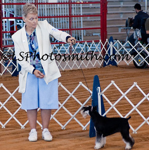 Ft Lauderdale Dog Show Edits-14
