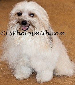 Ft Lauderdale Dog Show Edits-20