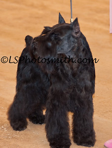 Ft Lauderdale Dog Show Edits-8