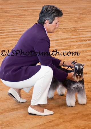 Ft Lauderdale Dog Show Edits-6