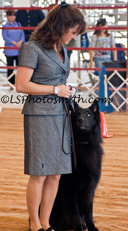 Ft Lauderdale Dog Show Edits-22