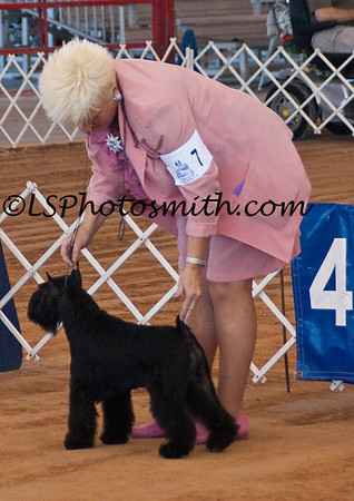 Ft Lauderdale Dog Show Edits-16