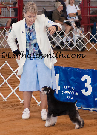 Ft Lauderdale Dog Show Edits-11