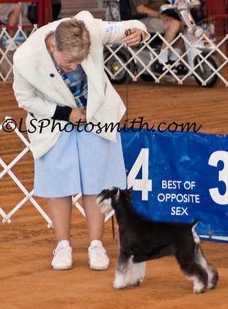 Ft Lauderdale Dog Show Edits-12