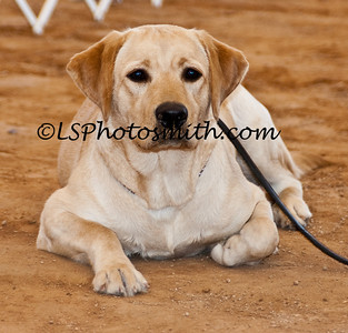 Ft Lauderdale Dog Show Edits-5