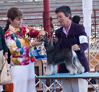 Ft Lauderdale Dog Show Edits-7