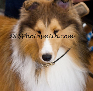 Ft Lauderdale Dog Show Edits-26