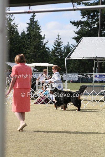 2010 Nisqually Kennel Club-Toy Group and Best in Show