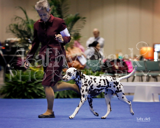 Friday Eukanuba December 2013