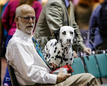 Mac & Derry AKC Natl 2013