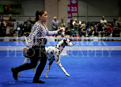 Mid Fla Dalmatian Club-Dec 2014