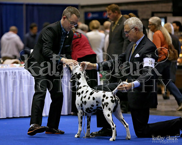 Friday Mid Fla Dalmatian Club