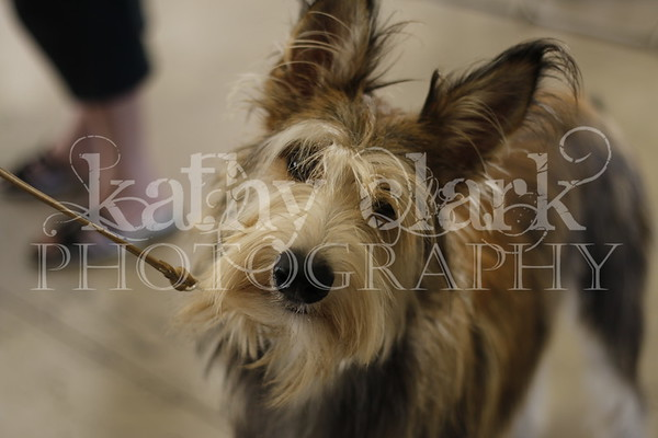 Lakeland Dog Show Sunday Feb 16 2014