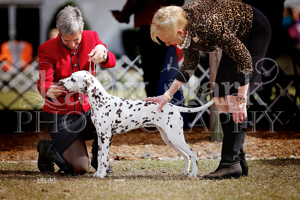 Ocala Dog Show Jan 26 2014