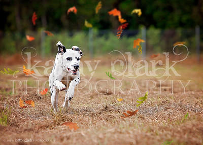 Hippie fall lure coursing