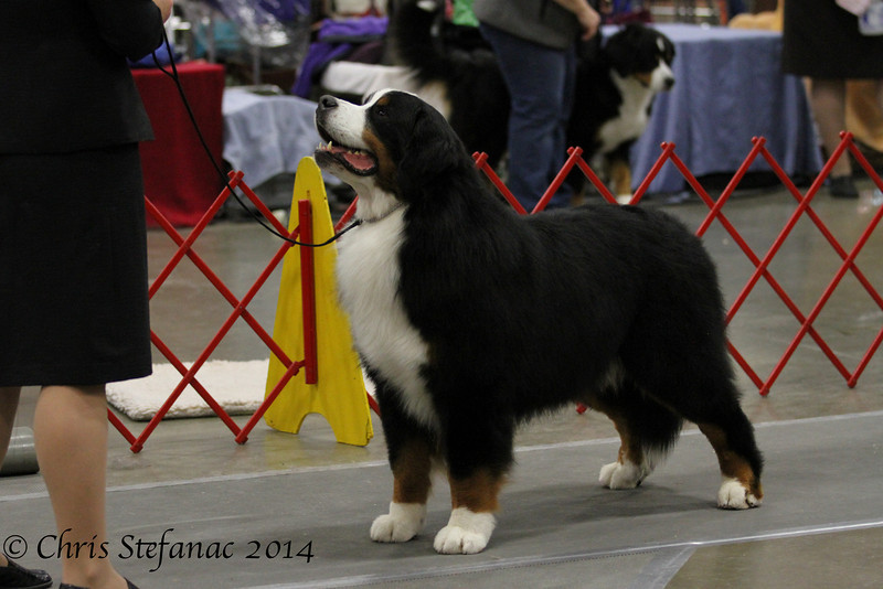 IMG_1093- GCH Peacefield's Searching For Stars at Lin Cars