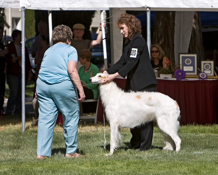1st - 9-12 Puppy Dogs<br /> ZOOROPA ADRIENNE HORIZON'S EDGE. HP262536/05. 5/8/07. Breeders: P.A. Anderson and J.A. Leikam. By Ch. Laureate Gavril Good As Gold – Ch. Adrienne Wind Rose. Owners: P.A. Anderson and J.A. Leikam    8x10