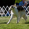 1st BBE<br /> KENAI'S CRIMINAL MINDS. HP250193/02. 3/23/07. Breeders: Michelle and John Rowton. By Kenai's The Flame Within – Kenai's Aria. Owners: Michelle and John Rowton  8x10