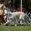 1st - Open Dogs<br /> TAUGO'S GUCCI. RE025514 (Canada). 3/31/06. Breeder: Merla Thomson. By Taugo's B Flyte of Ryzann – Elista's Sahara Moon. Owner: Merla Thomson (Agent: Rhanda Glenn) 8x10
