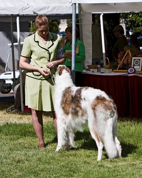 1st in Am Bred Dogs<br /> VITRINA ALPENGLOW. HP213978/01. 4/27/06. Breeder: Valori Vig Trantanella. By Vitrina The Rainmaker – Ch. Vitrina Northern Lights. Owner: Valori Vig Trantanella   8x10