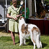 1st in Am Bred Dogs<br /> VITRINA ALPENGLOW. HP213978/01. 4/27/06. Breeder: Valori Vig Trantanella. By Vitrina The Rainmaker – Ch. Vitrina Northern Lights. Owner: Valori Vig Trantanella   8x10